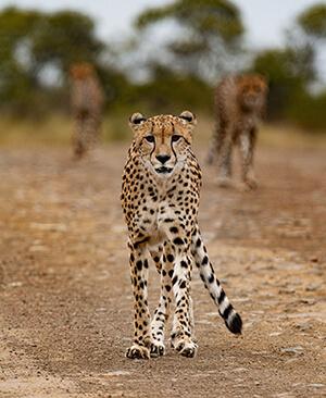 wildlife-img4